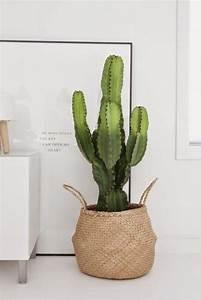 Cactus Sans Epine : cactus vari t s entretien floraison rempotage ~ Melissatoandfro.com Idées de Décoration
