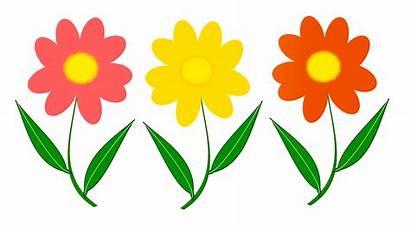 Flowers Flower Clipart Transparent Clip Yellow Flores