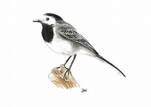 Heimische Singvögel Bilder : heimische fauna jagdbildungszentrum bayern ~ Whattoseeinmadrid.com Haus und Dekorationen