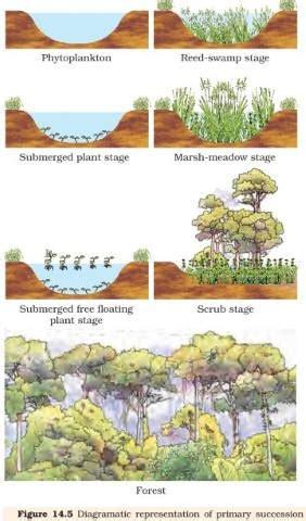aquatic succession stages