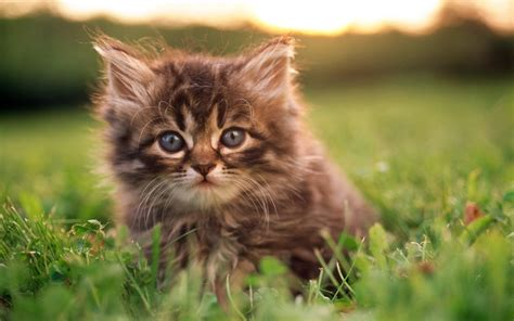 Kitten Backgrounds by Kittens In Grass Wallpapers Mobile Wallpapers