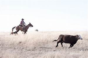 Cattle Drive Photograph by Cindy Singleton