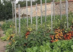Plantes Amies Et Ennemies Au Potager : les 92 meilleures images du tableau jardin sur pinterest ~ Melissatoandfro.com Idées de Décoration
