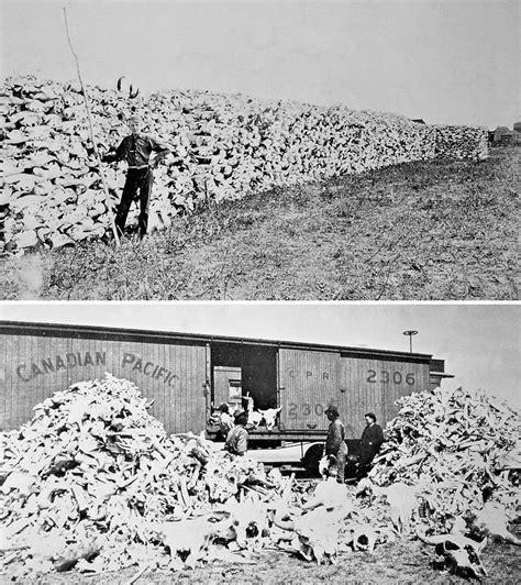 Bison skulls to be used for fertilizer, 1870