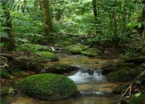 Amazon Rainforest wallpaper - ForWallpaper.com
