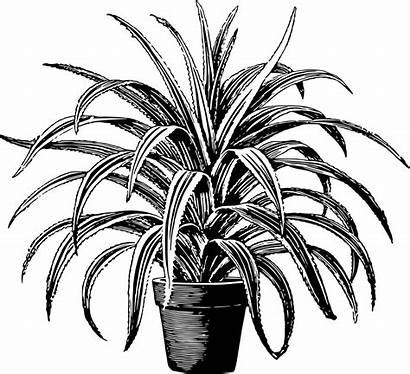 Plant Clipart Potted Plants Tree Clip Leaf