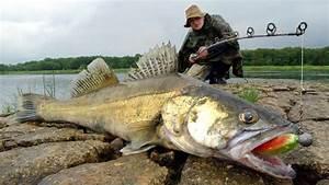 Bilder Mit Fischen : warum angeln die sch nste form des scheiterns spiegel online ~ Frokenaadalensverden.com Haus und Dekorationen