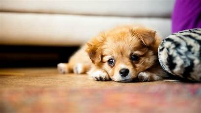 Puppy Super Screensavers Pleasing