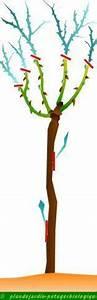 Comment Tailler Les Rosiers : taille d 39 un rosier tige et pleureur ~ Nature-et-papiers.com Idées de Décoration
