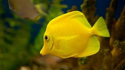 Fish Wallpapers Gold Backgrounds Cool Windows Background