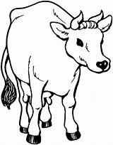 Cow Coloring Pages Animal Printable sketch template