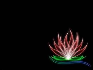 Lotus 3D and CG & Abstract Background Wallpapers on
