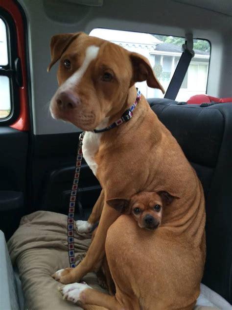 merrill taco rocket dog rescue