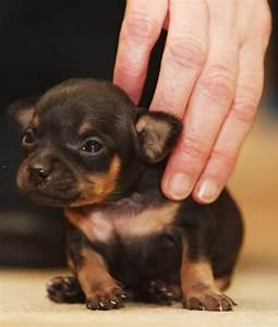 Puppy awareness week: Pup Aid to help raise awareness of ...