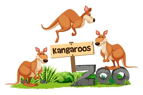 kangaroos zoo sign kangaroo vector three background animals kangourou wild clipart illustration system graphics colorful vecteezy