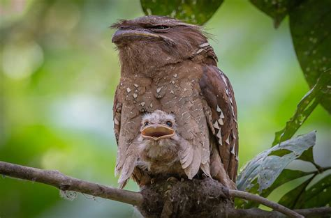You will laugh! It turns out what birds are the most ...