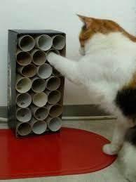 Katzenspielzeug Selber Machen Karton : die besten 25 katzenspielzeug selber machen ideen auf pinterest katzenspielzeug selber bauen ~ Frokenaadalensverden.com Haus und Dekorationen