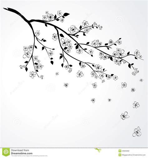 Cherry Blossom Branch Pencil Drawing Wwwpixsharkcom