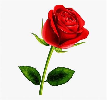 Rose Single Clipart Flower Flowers Flor Pretty