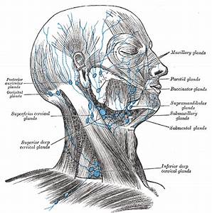 Occipital Lymph Nodes