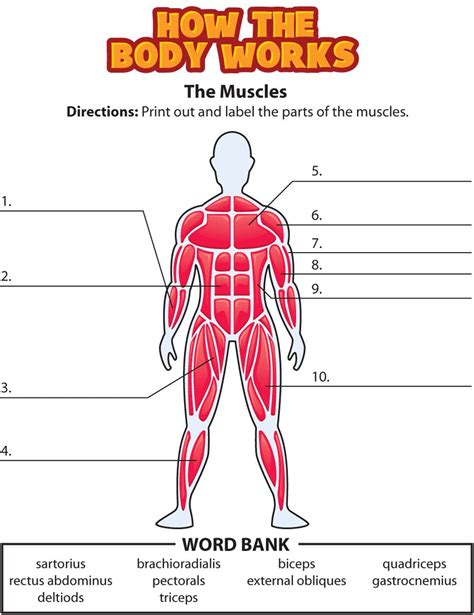 It is a perfect combination of multiple muscles working in harmony and complementing each other in various. Muscle Diagram Blank | Human body activities, Human body ...