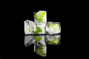 Salbei Einfrieren Oder Trocknen : basilikum einfrieren roh blanchiert oder lecker p riert ~ Orissabook.com Haus und Dekorationen