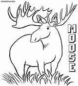 Moose Coloring Pages Animal Male Colorings sketch template