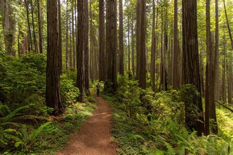 Redwood National + State Parks | Outdoor Project