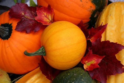 Fall Backgrounds Pumpkins by 47 Free Fall Wallpapers With Pumpkins On Wallpapersafari