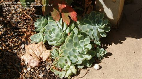 succulent plant identification images plant identification id succulent 1 by angie12345