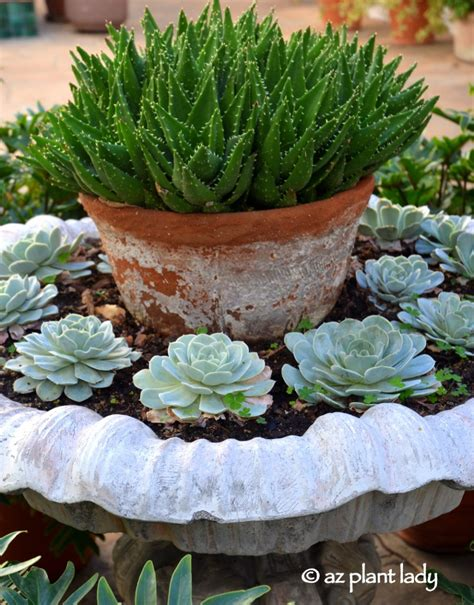 succulents in water give water features new life with succulents ramblings from a desert garden