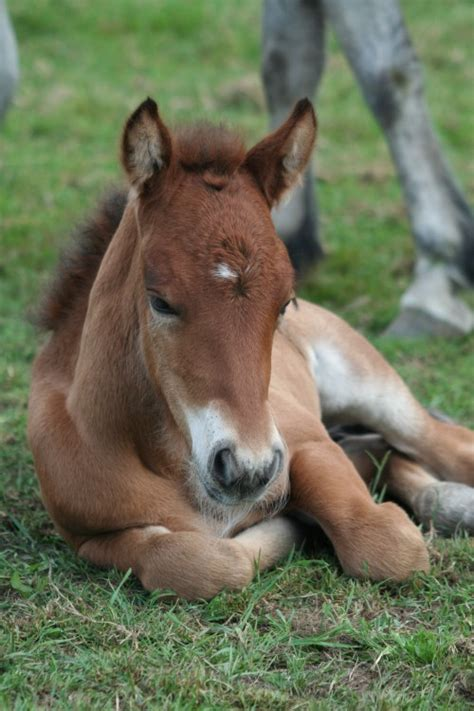 cute animals baby animal horses horse adorable pony babies cutest really ponies brown says cuteness quotes productive earth foal bing