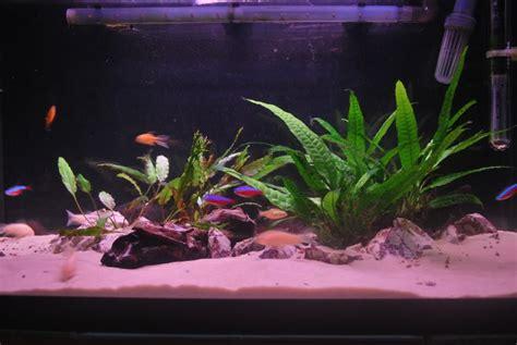 juwel aquarium rekord 600 juwel rekord 600 aquarium day 8 uk aquatic plant society