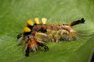 Caterpillar Wallpapers  Pictures  Images