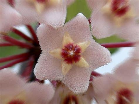 cespugli sempreverdi con fiori piante sempreverdi con fiori piante da giardino piante
