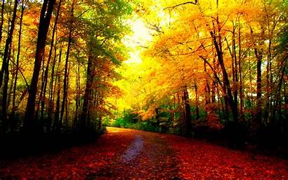 Autumn Fall Wallpapers Backgrounds Nature Computer Colors
