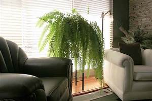 Fluorescent Light Will Not Turn On Tips For Growing Ferns Indoors