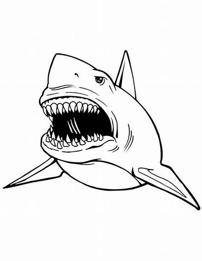 Shark Coloring Pages Sharks Colouring Books