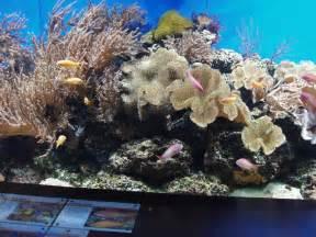 aquarium  coral  london zoo  david hawgood cc  sa