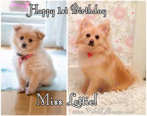 Happy Birthday Cute Puppy Dog