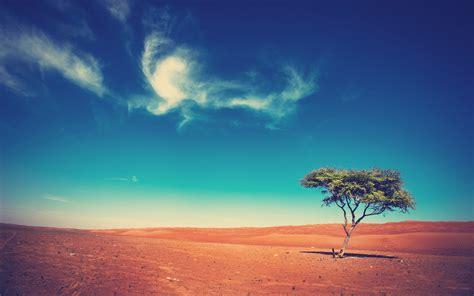 Landscape Trees Desert Wallpapers Hd Desktop And
