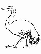 Australian Emu Template Animal Coloring Printable Templates Pages Getcolorings sketch template