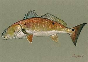 Redfish Watercolor Painting Painting by Juan Bosco