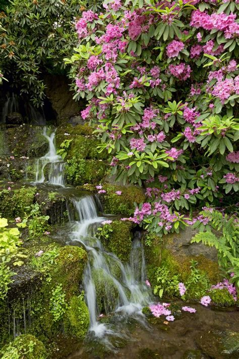 springs rhododendron garden 10 best images about in oregon on
