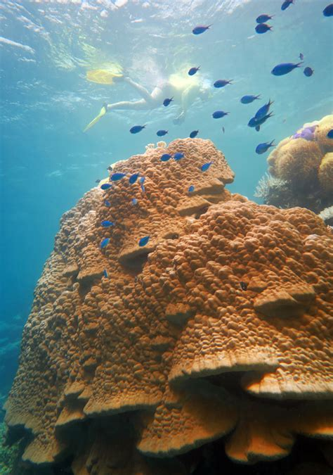 dead coral  pictures descriptions