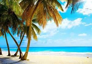 summer palms vacation tropical sea paradise