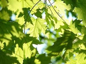 Wirkung Der Farbe Grün : mehr gr n in der wohnung entspannt lykkelife ~ Markanthonyermac.com Haus und Dekorationen
