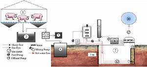 Systematic Flow Diagram Of The Pilot Ugad   1  Pig House