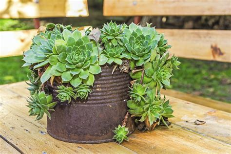 Creative Containers For Succulents - Using Interesting Containers For Succulent Gardens