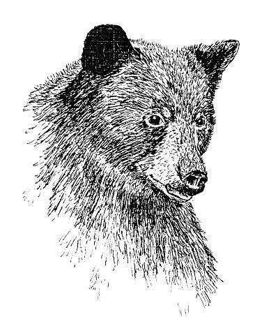 drawing animals    ink sketch pinterest